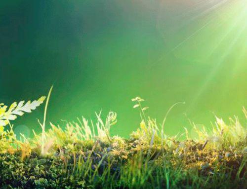 Środowisko,  zrównoważony rozwój